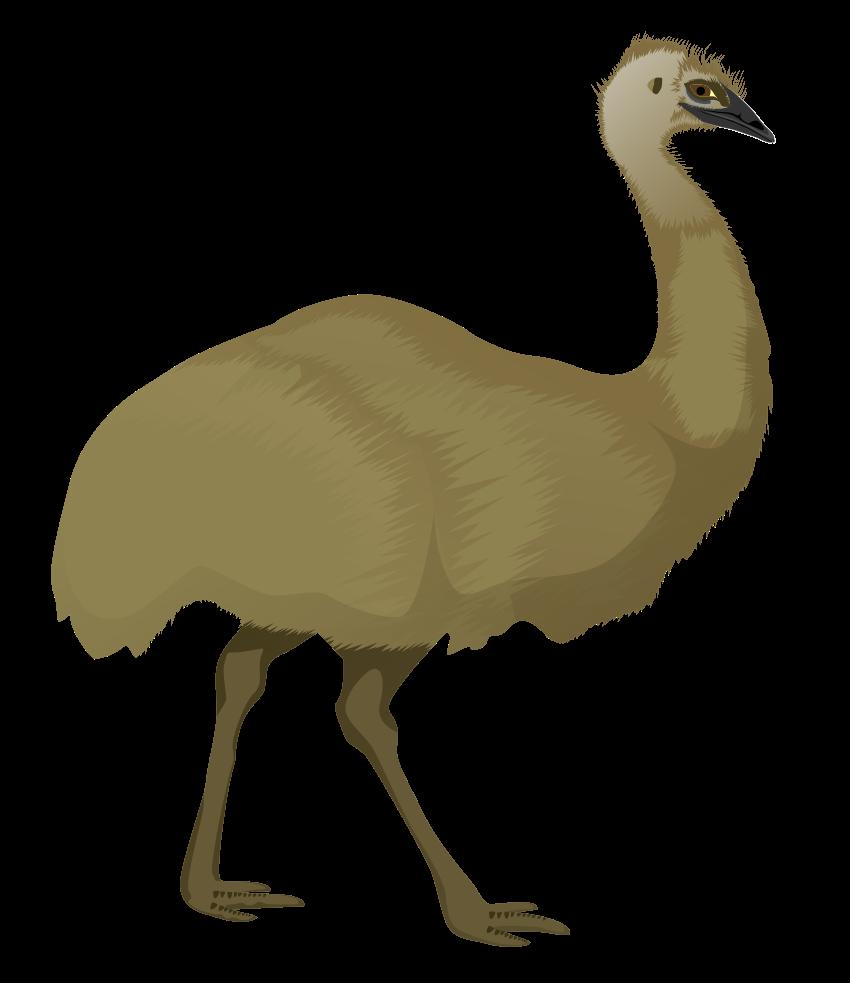 Emu clipart 0 Clipart emu Fans emu