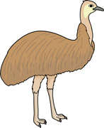 Emu clipart Pictures emu Results for In