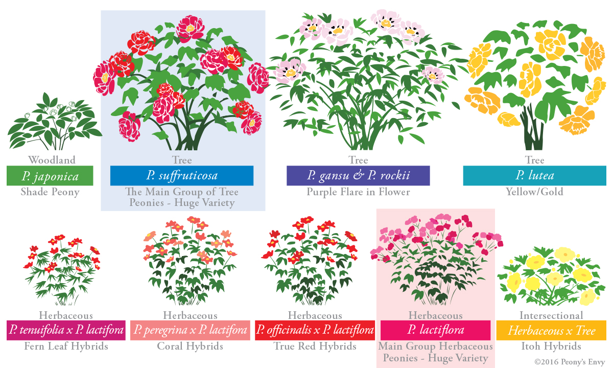 End clipart june flower Weeks typically ending cycle Intersectional