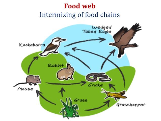 Energy clipart environmental study Ecosystems in Energy Environmental Flow