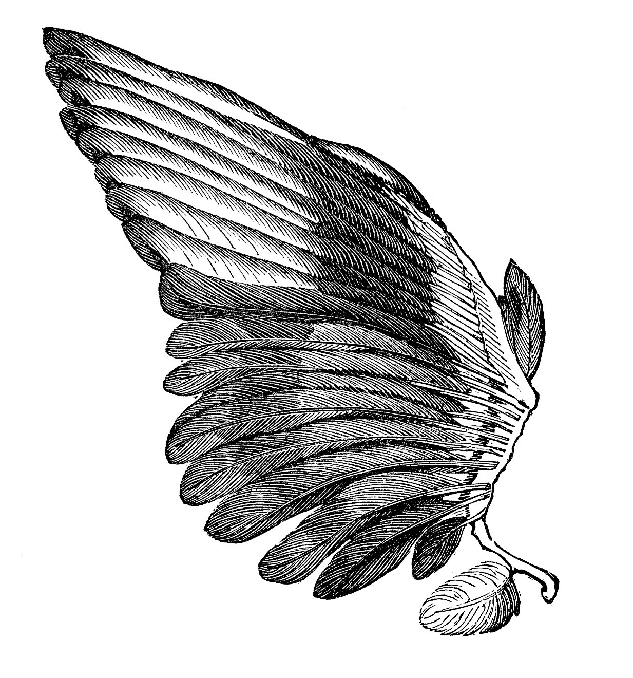 Wings clipart feather Art Clip Image Image Vintage