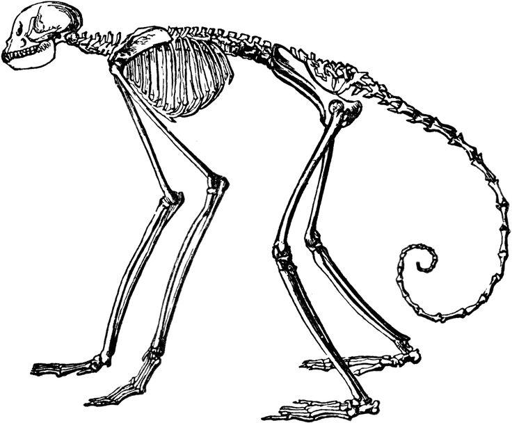 Engraving clipart animal skeleton And 28 Insides Skeleton images