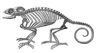 Engraving clipart animal skeleton 10 Skeleton Page of Art
