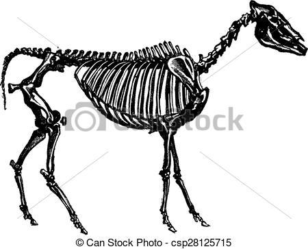 Engraving clipart animal skeleton Of engraving skeleton a of