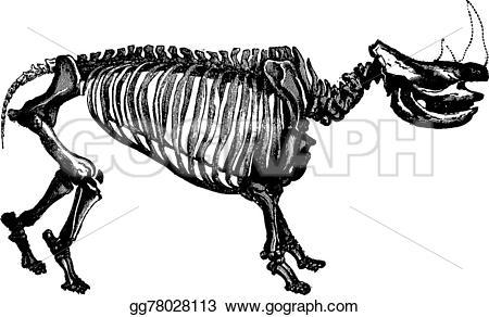 Engraving clipart animal skeleton – of man 1886 Rhinoceros