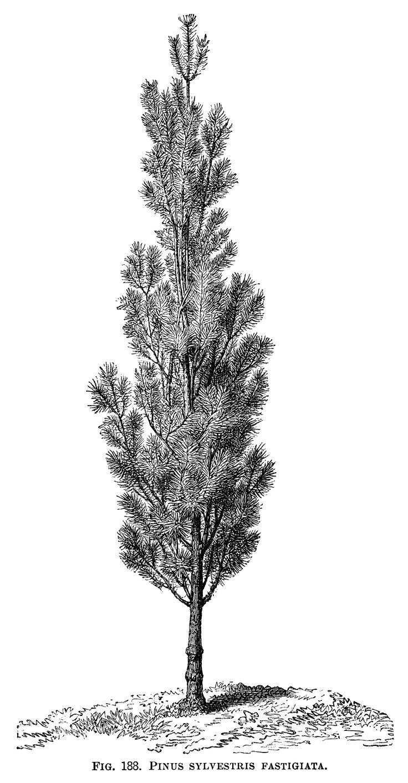 Engraving clipart art Pinterest Free Black Tree Vintage