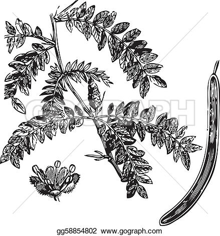 Engraving clipart art Honey on locust locust Art