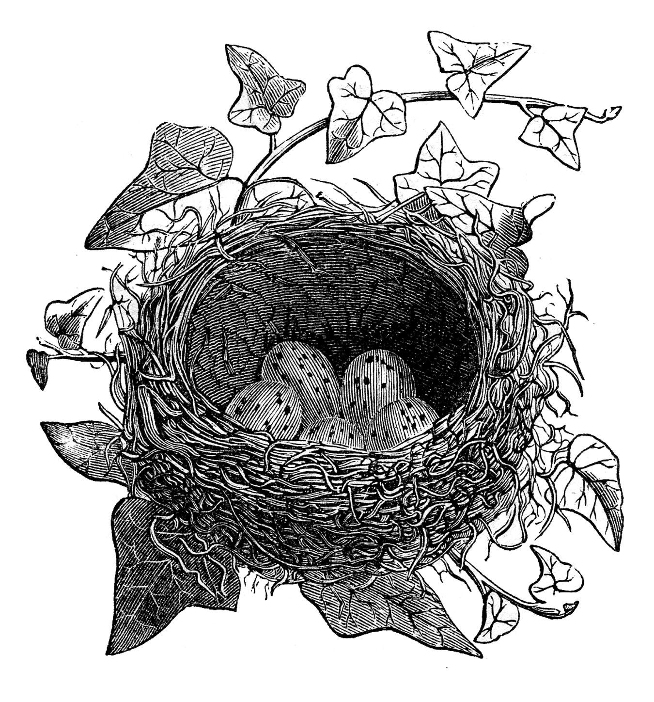 Ivy clipart vintage Vintage Fairy Birds Engravings Birds