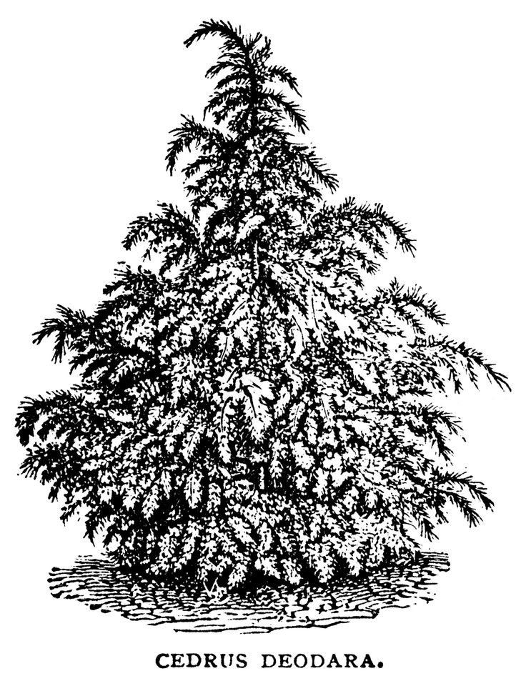 Christmas Tree clipart vintage Sketch Graphics tree images Christmas