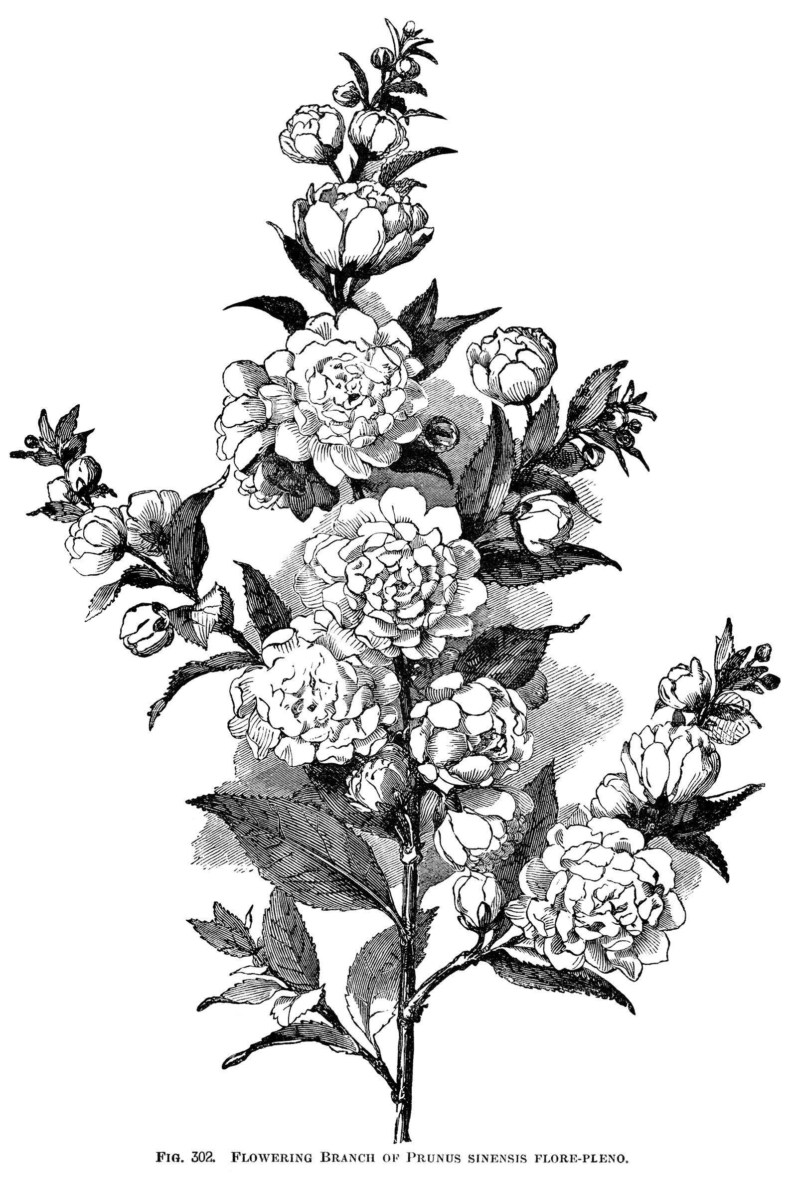 Engraving clipart floral Tree floral illustration vintage engraving