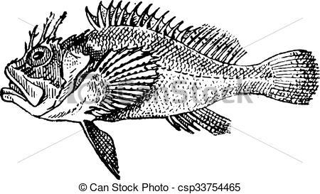 Engraving clipart logo Clip Stonefish engraving Rockfish Vector