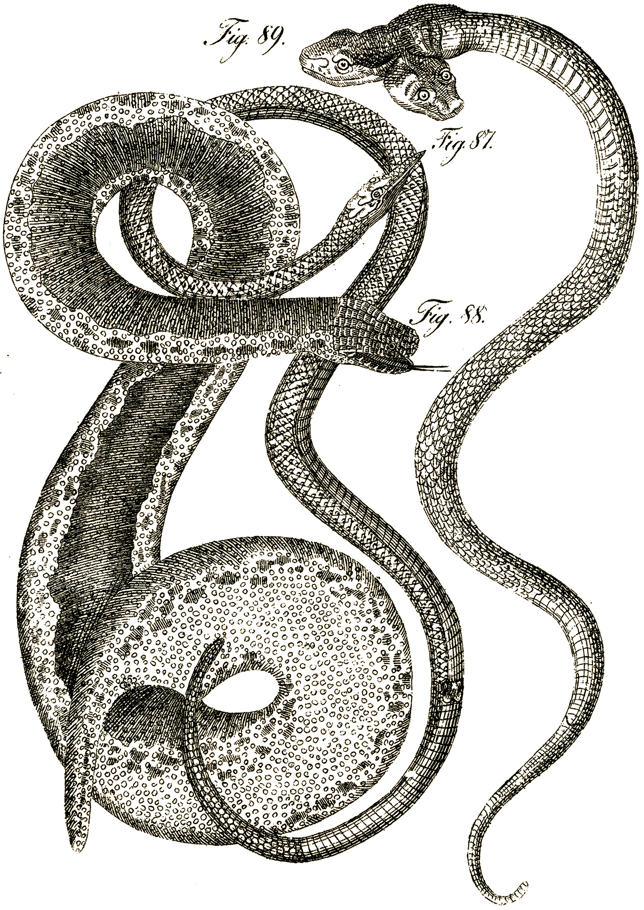 Serpent clipart snake head Graphics Clip Snake Headed Art