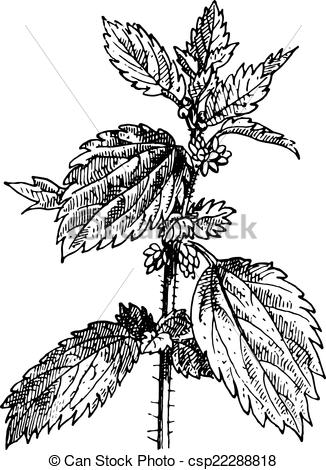 Engraving clipart vector Stinging csp22288818 vintage Stinging Nettle