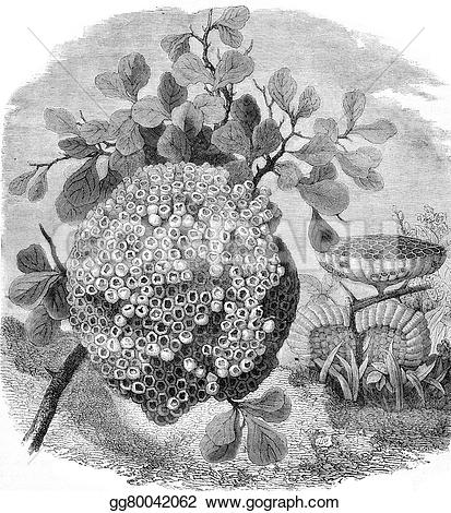 Engraving clipart wasp 1877  Drawing bareilly Pale