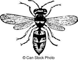 Engraving clipart wasp Wasp vector Clip