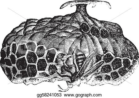 Engraving clipart wasp Wasp  nest engraving Stock