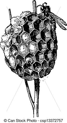Engraving clipart wasp Or of engraving Polistes Nest