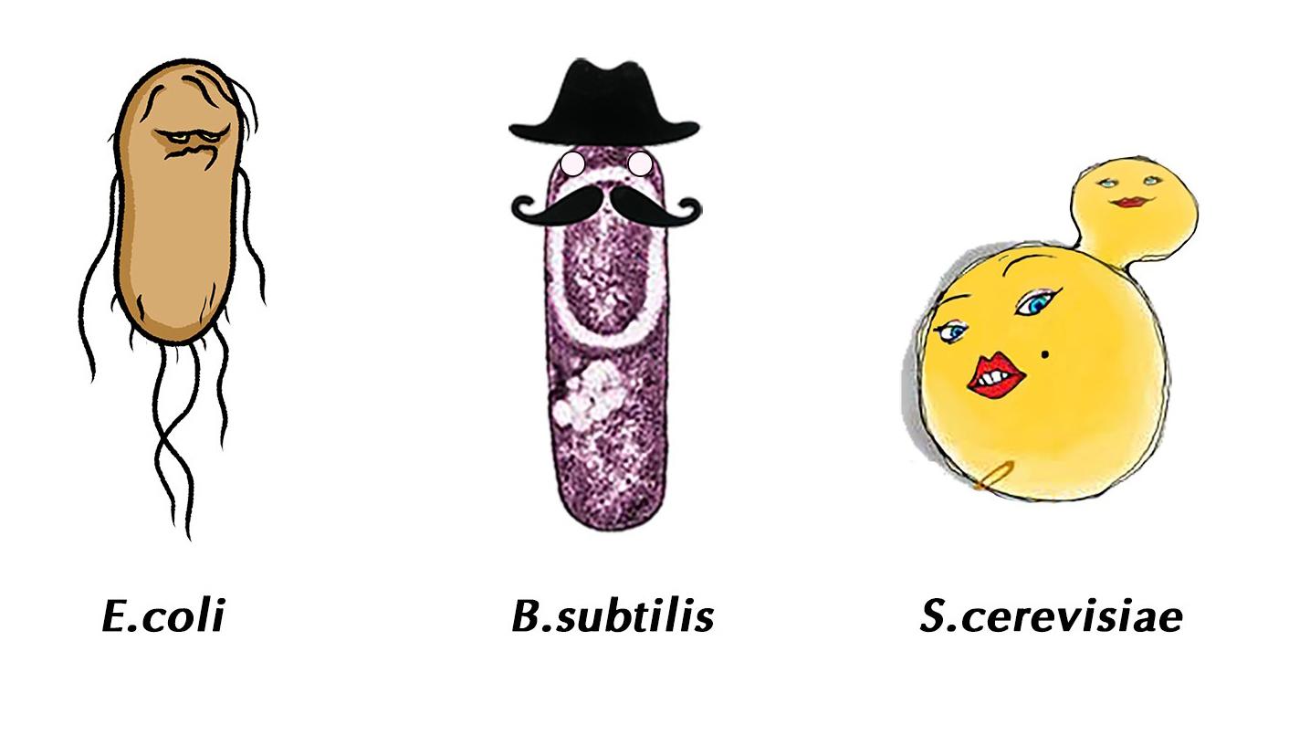 Escherichia Coli clipart cartoon Biology org 1 synthetic 2016