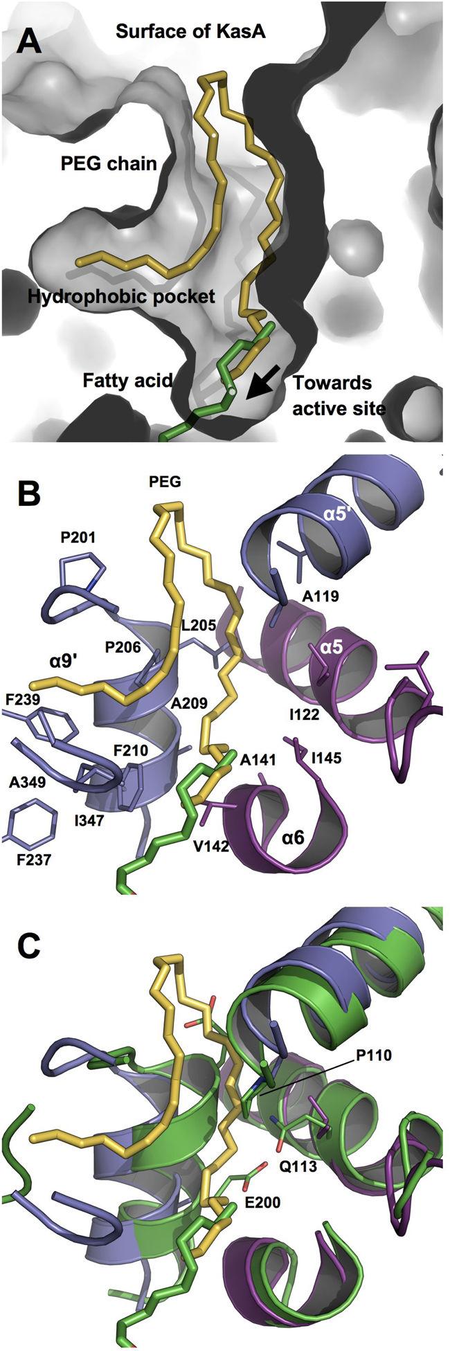 Escherichia Coli clipart tuberculosis Tuberculosis Figure E coli in
