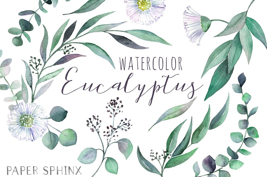 Eucalyptus clipart Photos Graphics Eucalyptus leaves Leaf