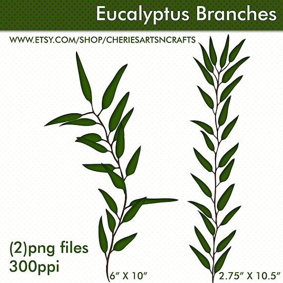Eucalyptus clipart Eucalyptus Clipart Foliage Clipart PNG
