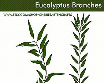 Eucalyptus clipart Clipart Foliage Graphics PNG Foliage