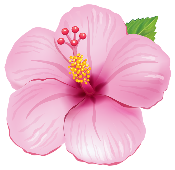 Exotic clipart Pink Clipart … PNG Picture
