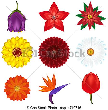Exotic clipart Collection  Collection flowers exotic