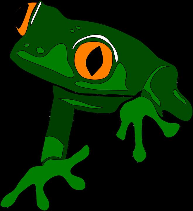 Amphibian clipart green thing  tropical rainforest amphibian wildlife