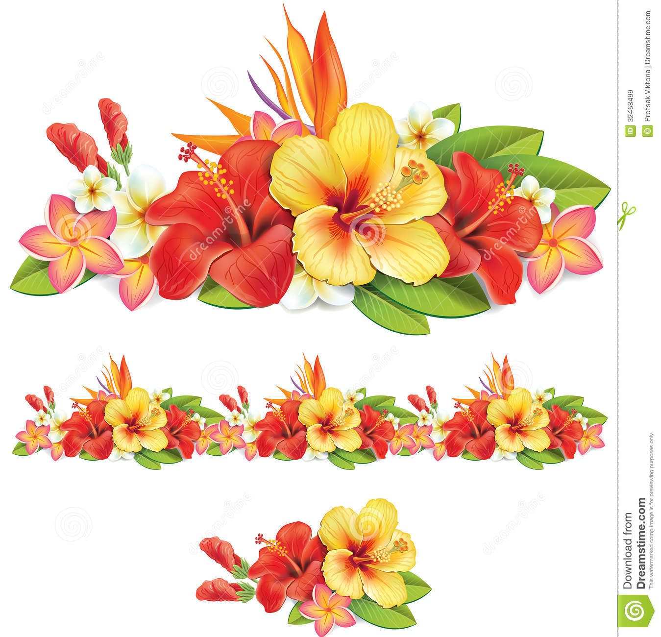 Plumeria clipart border Of pictures exotic flowers of