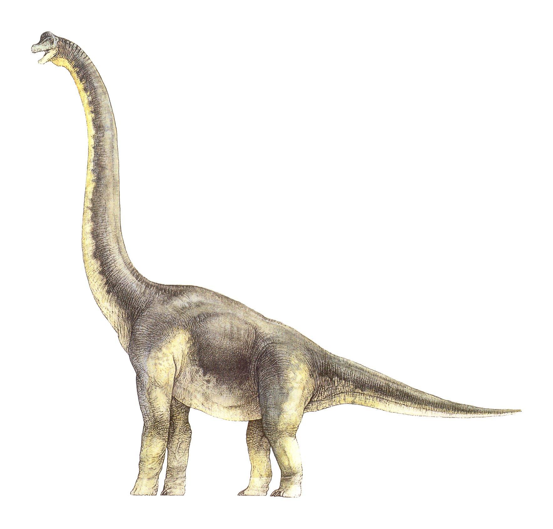 Brachiosaurus clipart extinct And Brachiosaurus tails Brachiosaurus Brazo)