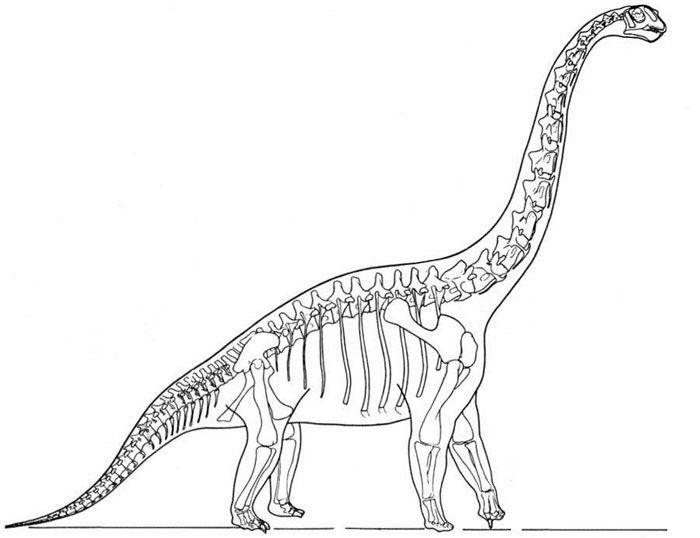 Brachiosaurus clipart dinosaur king Brachiosaurus of a on Dinosauria