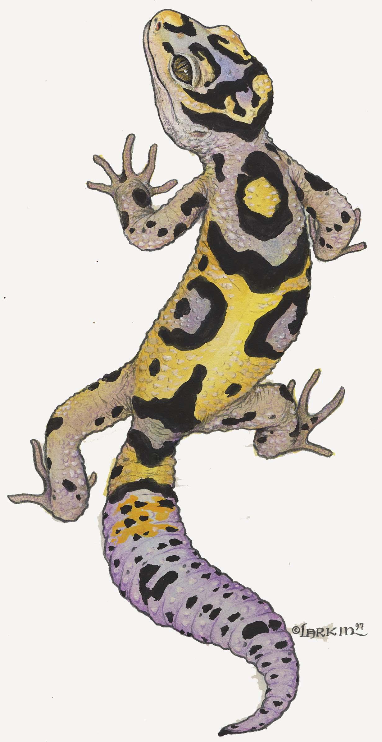 Drawn reptile gecko Lizard Leopard Lizard clipart Leopard