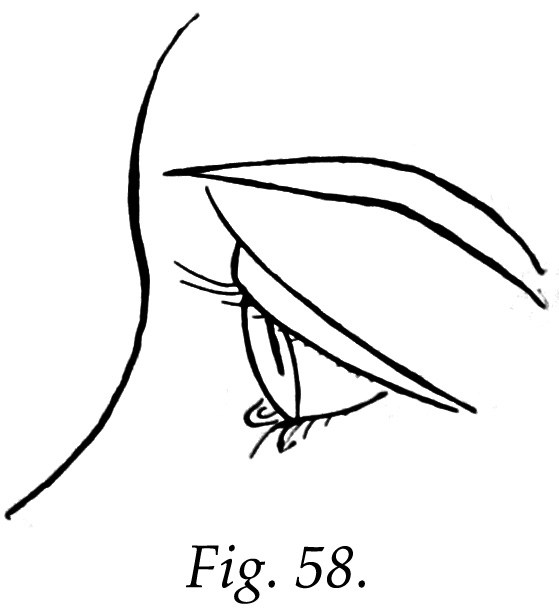 Eye clipart side view #4