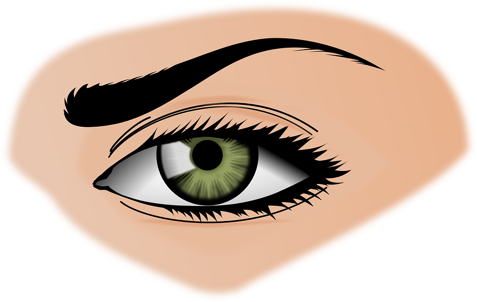 Brown Eyes clipart brow Female Iris Iris Eyebrows Eye