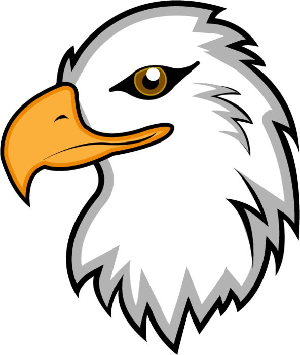 Bald Eagle clipart face Eagles and Pin Pinterest on