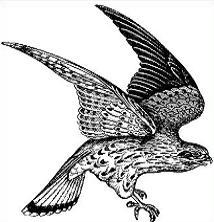 Falcon clipart Clipart Free Falcon Falcon