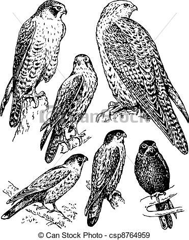 Bird Of Prey clipart white falcon EPS of birds Some Bird
