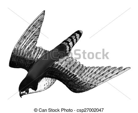 Peregrine Falcon clipart drawing Falcon of drawing flight csp27002047