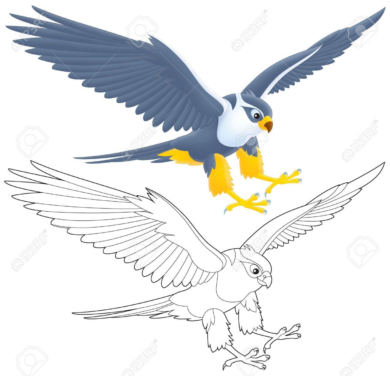 Peregrine Falcon clipart falcon flying Photo#2 Flying Falcon Clipart Falcon