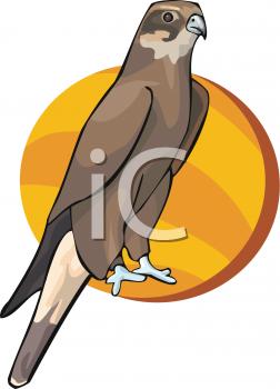 Falcon clipart hawk #6