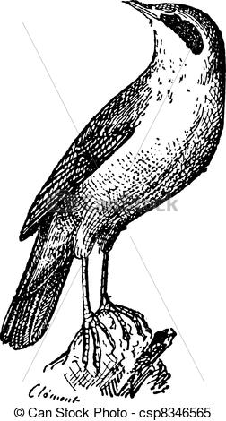 Falcon clipart strong Of  Clipart rock on