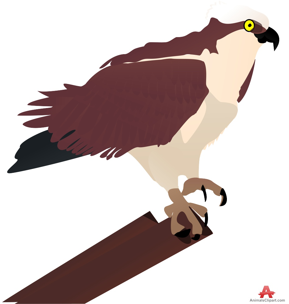Falcon clipart strong Clipart on Clipart Design Hawk