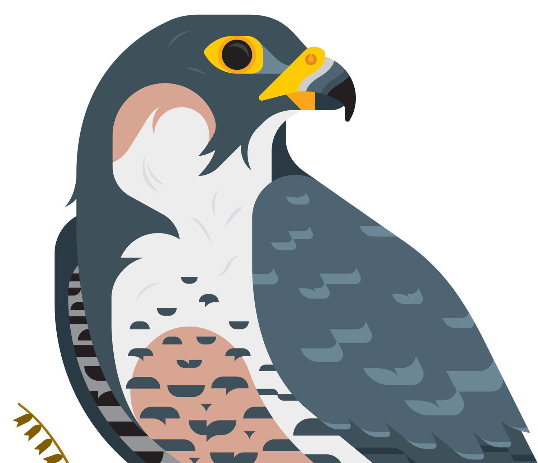 Falcon clipart peregrine falcon Com buyolympia Always With Honor