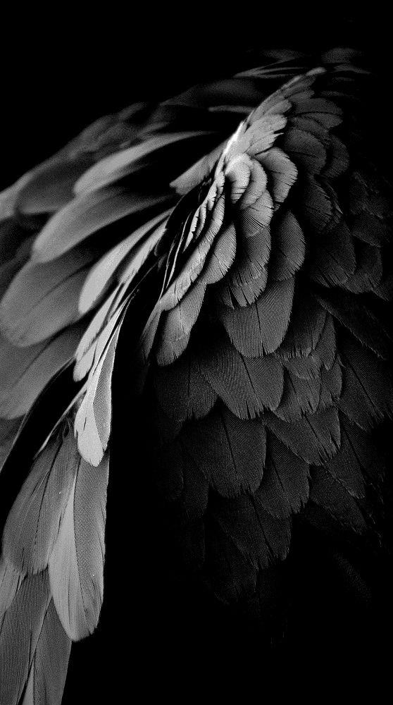 Fallen Angel clipart flash angel Wings Pinterest on 25+ ·