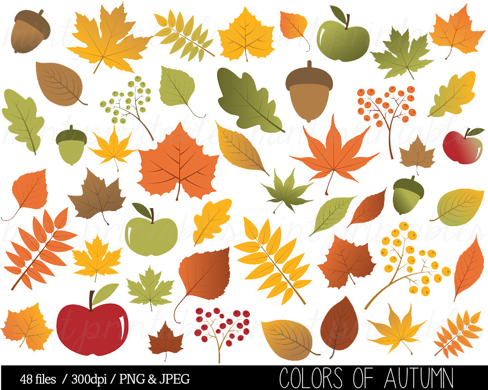 Leaf Clip Clipart Thanksgiving Autumn