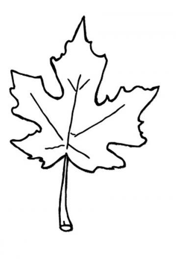 Leaves clipart leaf outline #13