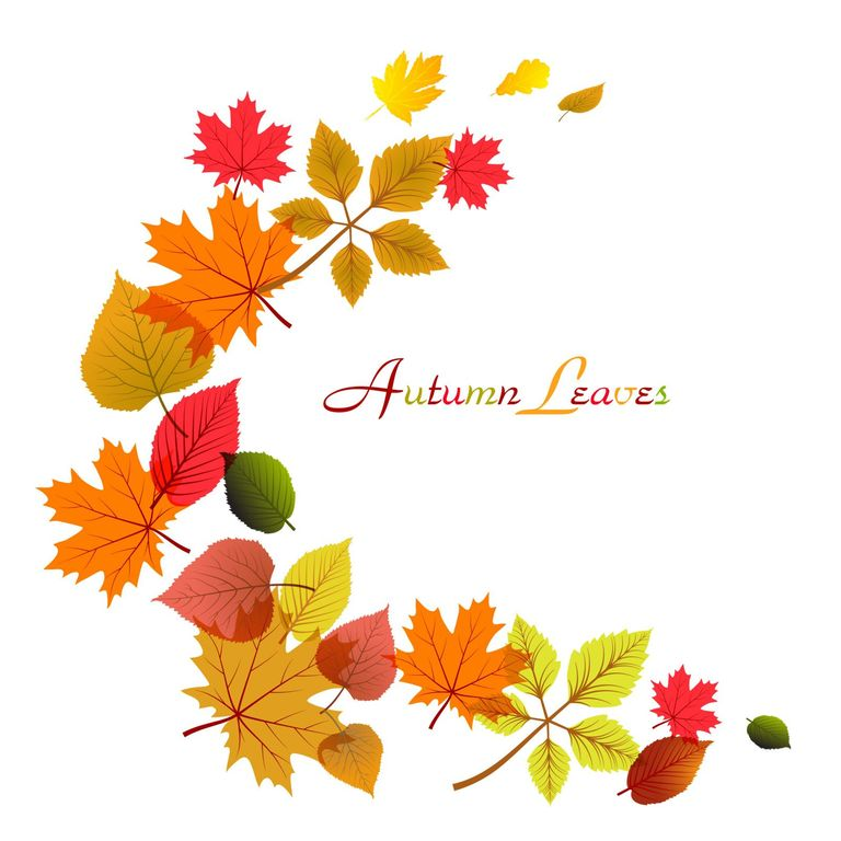 All Leaves Clip Collections Fall