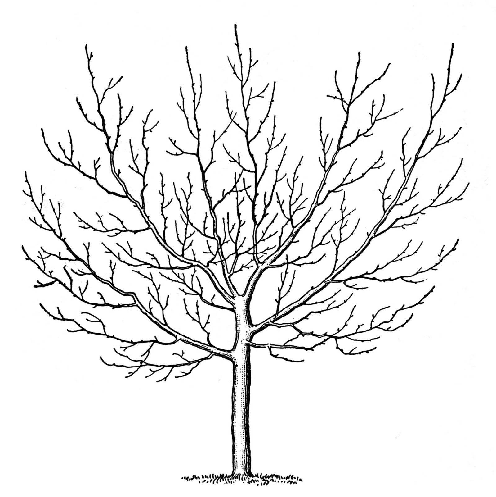 Winter clipart winter tree Winter Vintage The Graphics Vintage
