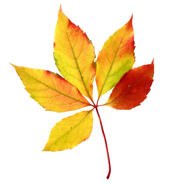 Leaves clipart fall season Autumn Leaves Leaf Autumn For